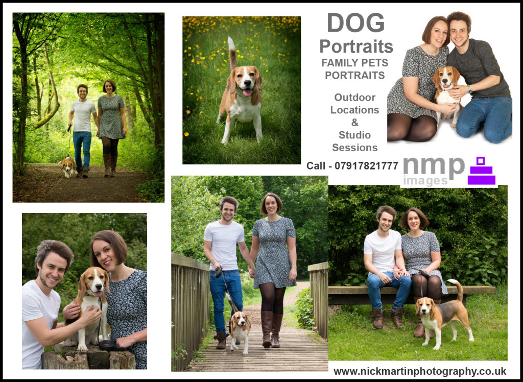 dog photography in woodley reading berkshire, wokingham, bracknell, dog portraits, family pet photographer, bracknell, slough, maidenhead